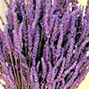 Cloth Wipe Solution Recipes - Lavender